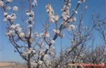 قصیده استاد قهرمان در وصف بهار ازغند