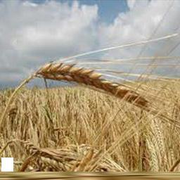 کشاورزان نمونه