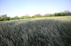 زمین های کشاورزی