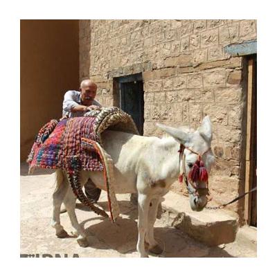 پالان دوزی روستای ازغند
