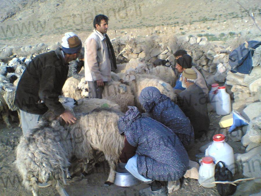 گله دوشی مردم ازغند